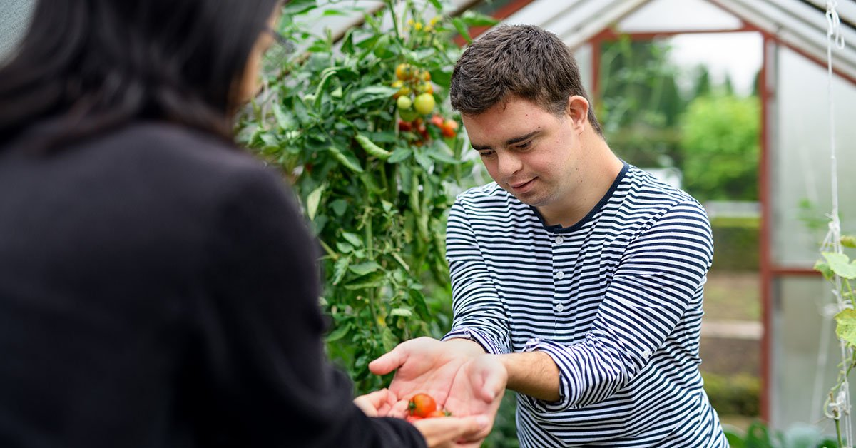 Down syndrome adult man with mother gathering tomatoes in greenhouse.